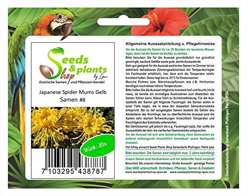 Premier Seeds Direct Lot de 20 graines de fleurs exotiques de Japon Spider Mums Jaune/orange