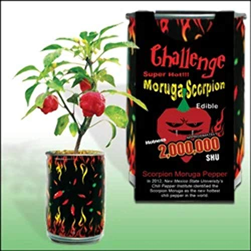 Moruga Scorpion Pepper - Grow Your Own Hottest Pepper in the World! -...