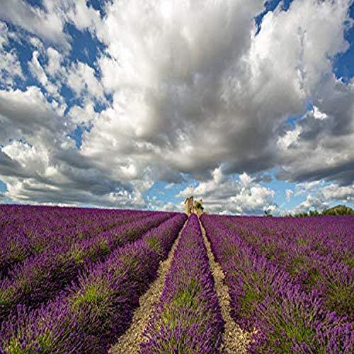 Posterazzi PDDEU09BJY0054LARGE France, Provence, Valensole Plateau. Lavender Rows and Stone Building Ruin. Credit as: Jim Nilsen/Jaynes Gallery/DanitaDelimont.com Photo Print, 36 x 24, Multi