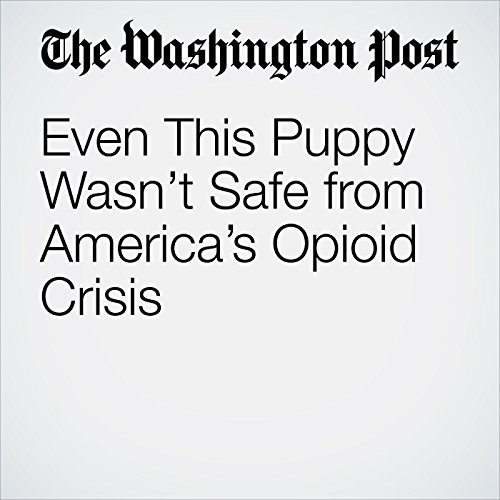 Even This Puppy Wasn't Safe from America's Opioid Crisis copertina