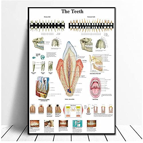 BINGJIACAI Cuadros anatómicos Cuadro de dientes humanos Pintura en lienzo Póster Impresión de imágenes artísticas de pared para la oficina de educación médica Decoración del hogar-50x70cm Sin marco