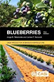 Blueberries (Agriculture)