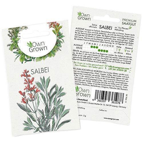 OwnGrown Premium Salbei Samen (Salvia officinalis), Salbei Samen mehrjährig, Saatgut für rund 15 Salbei Pflanzen