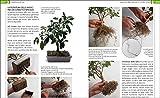 Zoom IMG-2 bonsai stili legature e potature