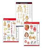 Medical Doctors Office Wall Art Bundle - 3 Laminated 24' x 36' Anatomy Posters - Skeletal System Poster, Spinal Cord Poster and Ear, Nose and Throat Poster