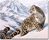 Alittle Pintar por Numeros para Adultos Nios Pintura por Nmeros con Pinceles y Pinturas Decoraciones para el Hogar Leopardo (16 * 20 Pulgadas, Sin Marco)