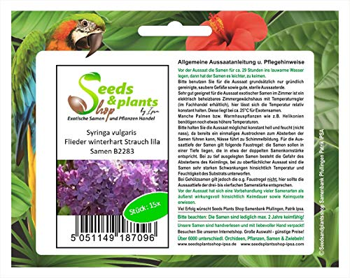 Stk - 15x Syringa vulgaris Flieder winterhart Strauch Pflanzen - Samen B2283 - Seeds Plants Shop Samenbank Pfullingen Patrik Ipsa