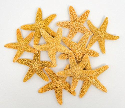 Sugar Starfish Decor | 10 Brown Sugar Starfish 3/4' to 1 1/4' | Plus Free Nautical eBook by Joseph Rains