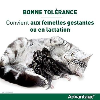 ADVANTAGE Chat – Anti-Puces pour Chats – Moins de 4KG - 6 Pipettes