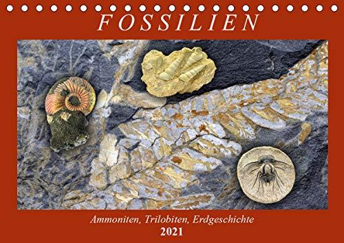 Fossilien - Ammoniten, Trilobiten, Erdgeschichte (Tischkalender 2021 DIN A5 quer)