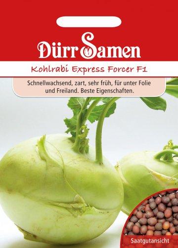 Kohlrabi Express Forcer F1 von Dürr-Samen