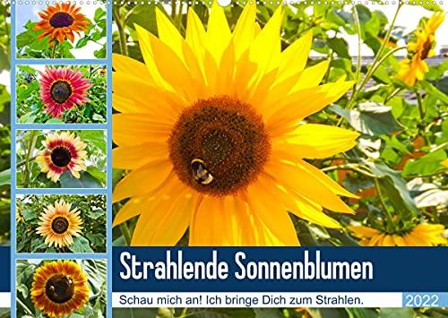 Strahlende Sonnenblumen (Wandkalender 2022 DIN A2 quer)