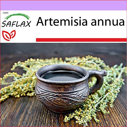 SAFLAX - Heilpflanzen - Chinesischer Beifuß - 250 Samen - Artemisia annua
