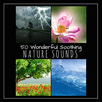 50 Wonderful Soothing Nature Sounds - Relaxing Ocean Waves, Gentle Rain and Thunderstorm, Birds and Crickets and Healing Water Springs