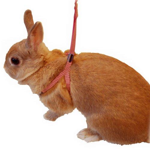 ミニアニマンウサギの簡単ハーネスリードグリーンMサイズ