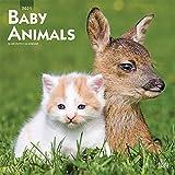 Baby Animals - Tierbabys 2021 - 16-Monatskalender: Original BrownTrout-Kalender [Mehrsprachig] [Kalender] (Wall-Kalender)