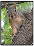 Excellent home Custom Squirrels in The Trees Unique Bed/Sofa Soft Throw Blanket 58'x80'