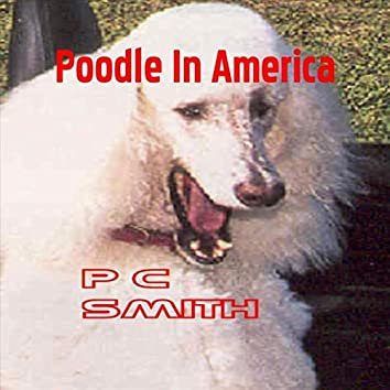 Poodle in America