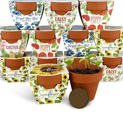 Buzzy Seeds Terra Cotta Minis 12-Pack - for Weddings, Parties, Events, Modern, Trendy, Unique and Fun Gardening Favors and Gifts - Growth Guaranteed! (Daydream - Assorted)