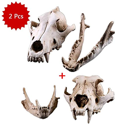 Cráneo en modelo animal Coyote perro Cráneo Material Resina lobo, coyote perro cabeza de figurilla Modelo - Colección a la barra del ornamento del arte de la decoración De la Tabla
