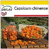 SAFLAX - Set de cultivo - Chile habanero amarillo - 10 semillas - Con mini-invernadero, sustrato de cultivo y 2 maceteros - Capsicum chinense