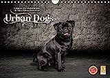 Urban Dogs - Hundekalender der anderen Art (Wandkalender 2021 DIN A4 quer)