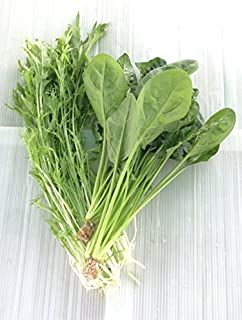 無農薬 10袋セット サラダほうれん草 (70g培地付き)5袋パック サラダ水菜 5袋パック