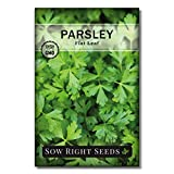 Sow Right Seeds - Flat Leaf Parsley Seed for Planting - Non-GMO Heirloom - Instructions to Plant and Grow a Kitchen Herb Garden, Indoor or Outdoor; Great Gardening Gift (1)