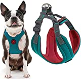 Gooby - Convertible Harness, Small Dog Step In Neoprene Harness with Easy Neck Fastener, Turquoise, Large