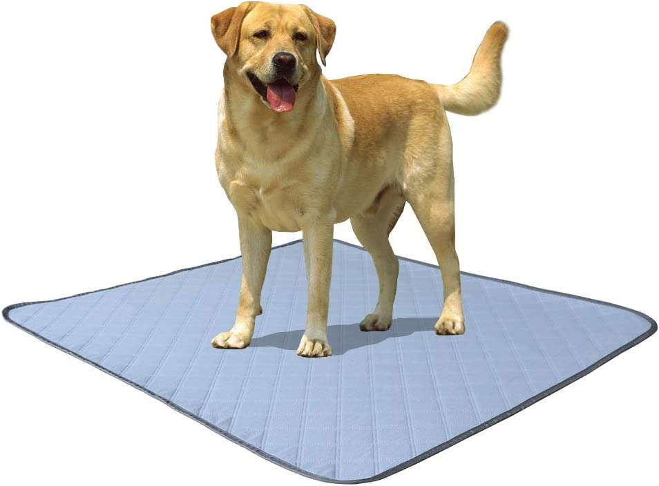 Pefirst Washable Pee Pads for Puppy Grooming +Free Brand Cheap Sale Venue Popular product Gloves Dogs
