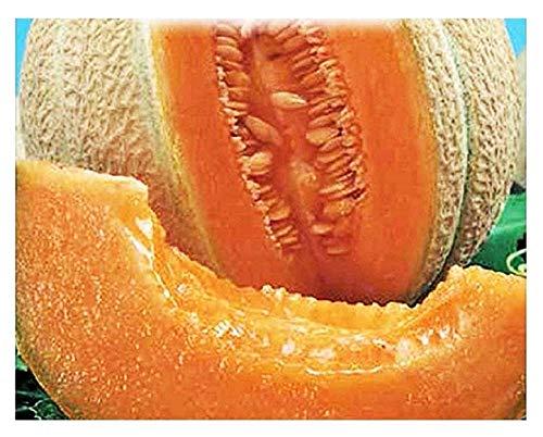 Top mark melon graines - légumes - cucumis melo - environ 150 graines - les meilleures graines de plantes - fleurs - fruits rares - melons - idée cadeau originale - excellente qualité