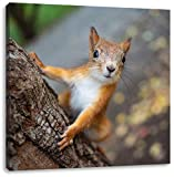 Pixxprint Nahaufnahme Eichhörnchen an Baumstamm als