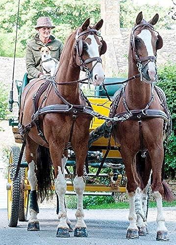 Harnais Zilco classic brun attelage à 4 - cheval, Z Grip avec arrêtoirs