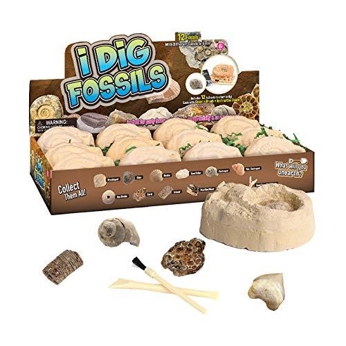 jieGorge Juguete Educativo, Kit de excavacin arqueolgica fsil de Juguete Hecho a Mano para nios, Juguetes y Pasatiempos (como se Muestra)