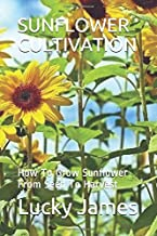 SUNFLOWER CULTIVATION: How To Grow Sunflower From Seed To Harvest