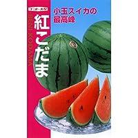 スイカ 種 【 紅こだま 】 種子 小袋(約8粒)