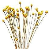 fleurs séchées bouquet 200 tiges de fleurs séchées naturelles du Brésil Petites fleurs séchées décoratives Mini marguerites camomille Bouquet pour mariage, bricolage, maison fleur artificielle mariage
