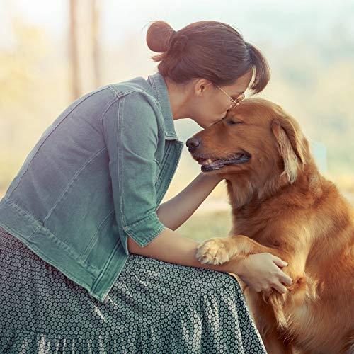Ida Plus - Reines Bierhefe-Pulver - 3 kg - 100% Naturprodukt für Hunde, Katzen & Pferde - Futterergänzung für glänzendes Fell & kräftige Haut - reich an B-Vitaminen, Mineralien & Spurenelemente - 6