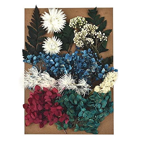 Kaxceay DIY Getrocknete Blume für Harzform, die echte Blume für Harz Füllungen Nail Art Home Handwerk Harz Casting Formwerkzeug (Color : 08)