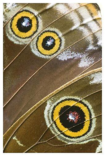 Obras de Arte Italia azul Morpho mariposa ala con falsos ojos espotes, Ecuador-Arte de papel-34