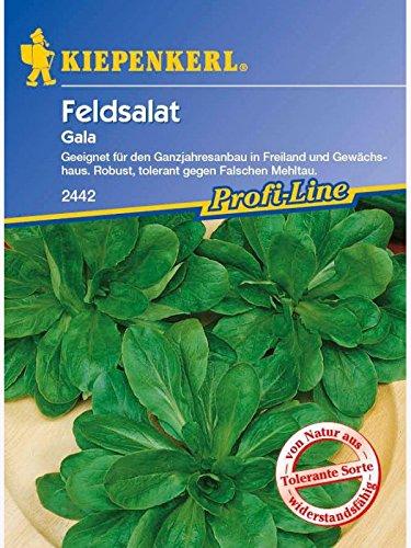 Feldsalat Gala tolerant