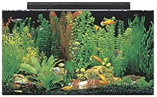 clear for life rectangle 75 gallon acrylic aquarium