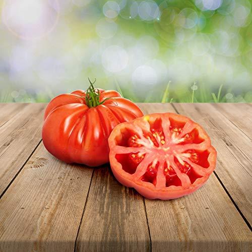 Tomate Montserrat Lot de 25 graines - du Portugal à faire pousser 100% naturelles, rares, idéales pour salade et snacks