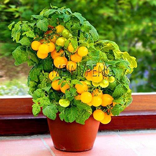 Pinkdose Meistverkauft!Sorte Kirschtomaten Bonsai Balkon Obstpflanzen Gemüse Topf Bonsai Topfpflanze Tomatenpflanzen, 100SEED: 12