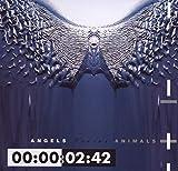 Songtexte von Front 242 - Angels Versus Animals