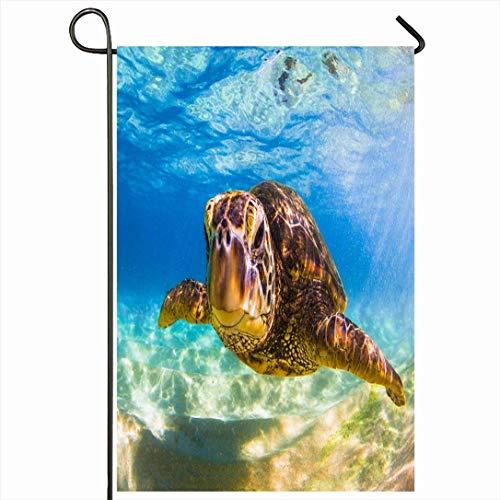 Bandera de jardín al aire libre 12.5 'x 18' Pulgadas Azul Océano En peligro de extinción Hawaiian Green Turtle Animales Fauna silvestre Naturaleza Arena Aloha Beach Coral Cruising Temporada Decoración