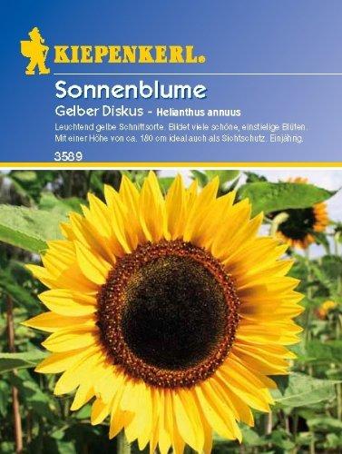 Sperli Blumensamen Sonnenblume Gelber Diskus, grün