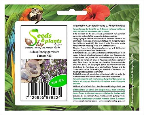 Stk - 65x Judaspfennig gemischt Lunaria Samen Blumen Garten Saatgut K83 - Seeds Plants Shop Samenbank Pfullingen Patrik Ipsa