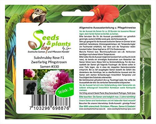Stk - 3x Subshrubby Rose F1 Zweifarbig Pfingstrosen Pflanzen - Samen #330 - Seeds Plants Shop Samenbank Pfullingen Patrik Ipsa