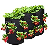 Grow Bags,NASUM Strawberry Planter Bags with Flap and Handles,3 Pack 10 Gallon Heavy Duty Fabric Plant Pots for Tomato,Carrot, Onion, Fruits, Flower and Vegetables